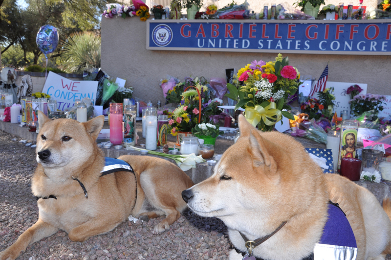 Rusty at Gabrielle Giffords office memorial. Photo by Dyan Bone